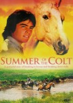 Summer of the Colt